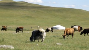 mongolie-site