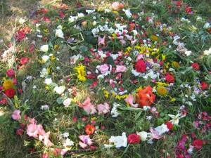 offrande mandala fleurs-reduit